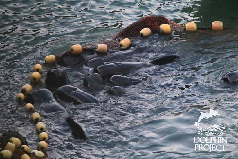 taiji japan pictures and videos and news citiestipscom